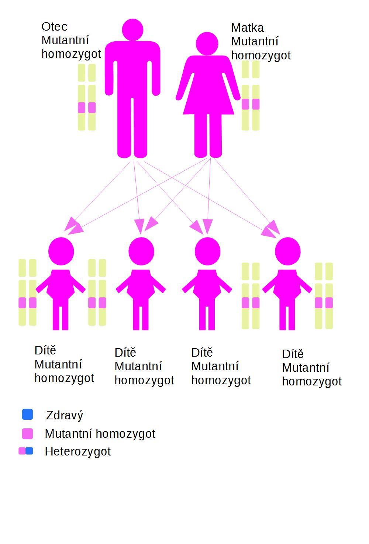 Všichni mutantní homozygoti